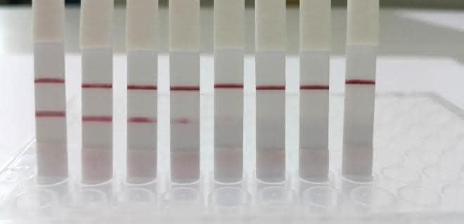 Analyseergebnisse von Wasserproben mit unterschiedlichen Kontaminations-Konzentrationen: Zwei Striche sind der Nachweis einer Verunreinigung.