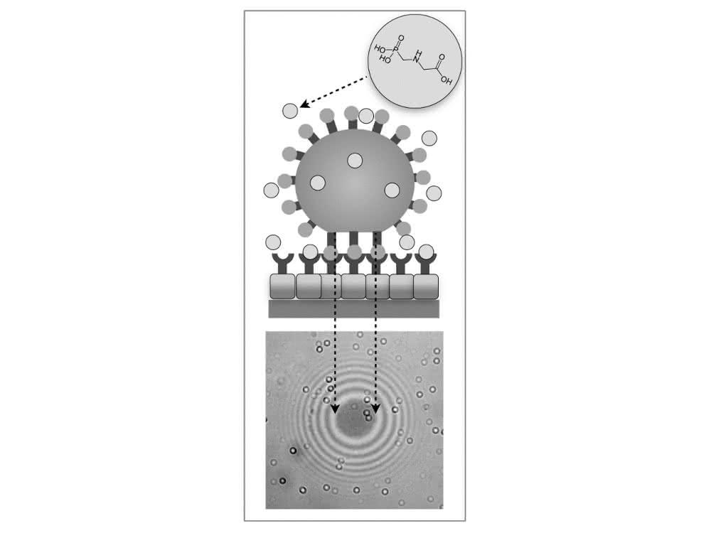Schematische Darstellung des Nachweisprinzips