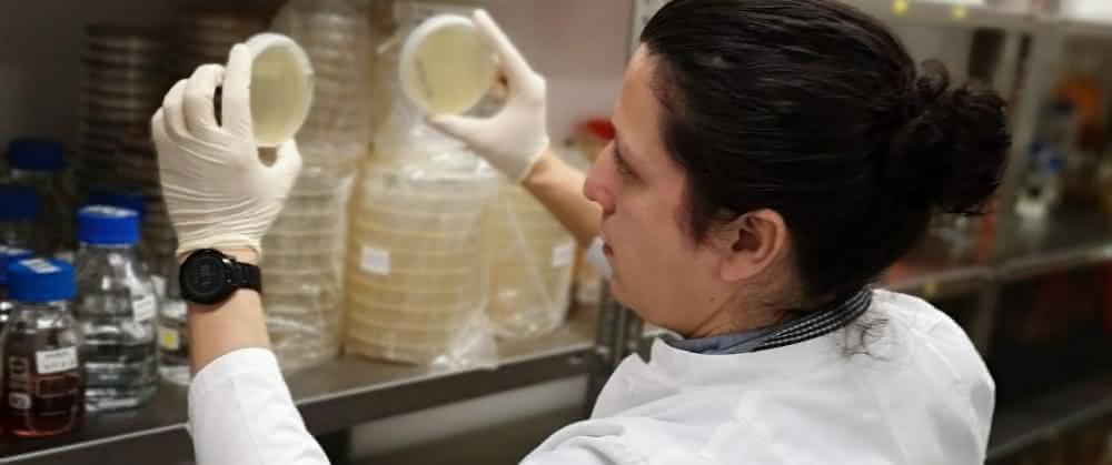 Wissenschaftler kontrolliert bakterielles Wachstum nach Phytase-Screening.