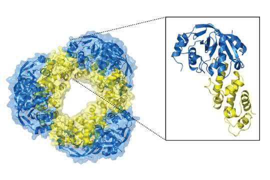 Die hochaufgelöste Struktur des Toxin-Antitoxin-Systems.