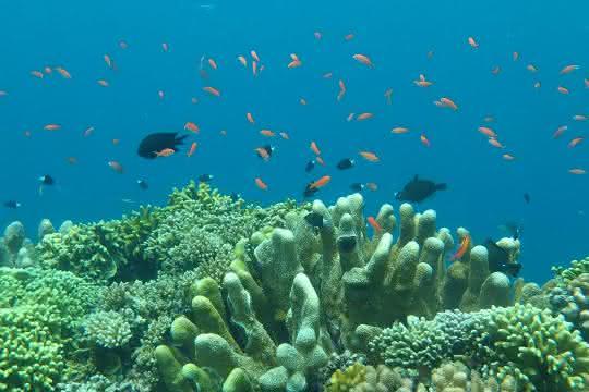 Korallen, Schwämme und Barsche vor der Pazifikinsel Guam