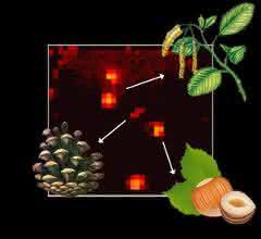 Abstrahiert: MALDI-Imaging-MS bei Pollenkörnern