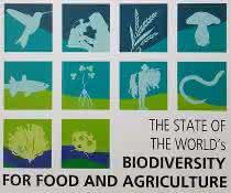 Titelseite des ersten Weltzustandsberichts für Biodiversität in Landwirtschaft und Ernährung