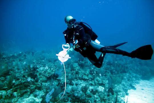 Professor Oscar Puebla bei Feldarbeiten im Lebensraum der Hamletbarsche vor Puerto Rico.