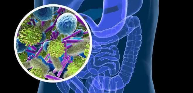 Fotomontage: Bakterien / Darmtrakt