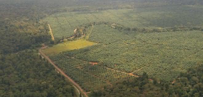 Tabin-Kulamba Gebiet in Sabah, Borneo