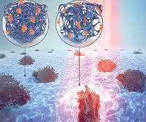 Grafik Zellen im Hydrogel