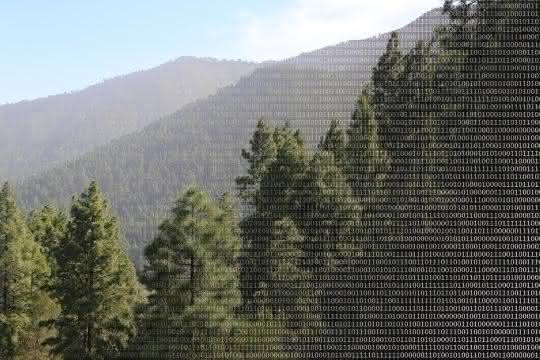 Wald und binäre Zahlen