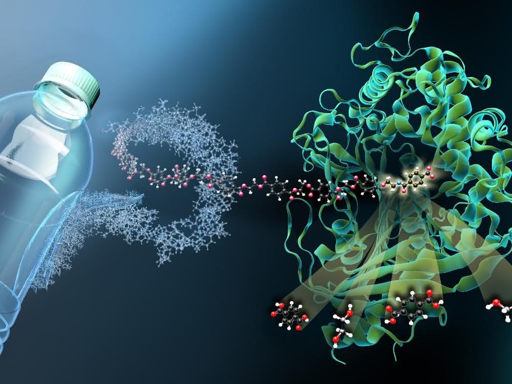 Das Enzym MHETase ist ein riesiges komplex gefaltetes Molekül. MHET-Moleküle aus PET-Kunststoff docken an einer aktiven Stelle im Inneren der MHETase an und werden dort aufgespalten.
