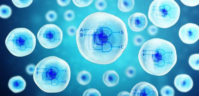 Grafik: zwei Rechnerkerne aus biologischen Materialien in menschlichen Zellen