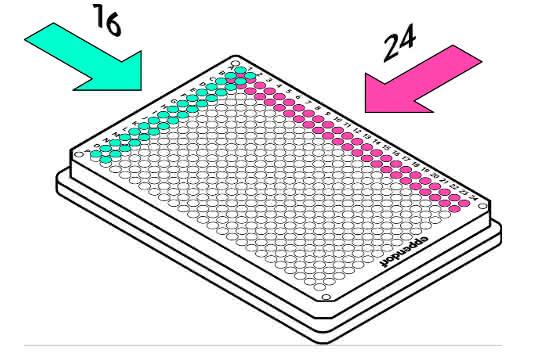 Bild 2: Ganze Reihen (24 Kanäle) oder Spalten (16 Kanäle) in einem Schritt pipettieren.