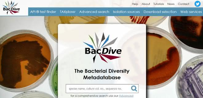 Screenshot BacDive-Datenbank