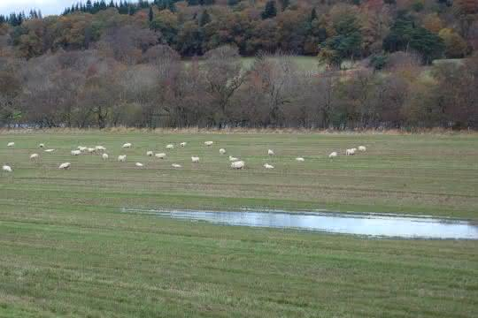 Nutztierhaltungen sind ein Eintragspfad für Fäkalkeime in Landschaften und Gewässer.