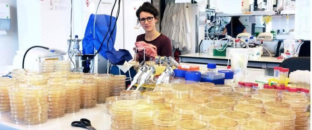 Tanita Wein untersuchte in ihrer Promotionsarbeit am Beispiel des Bakteriums Escherichia coli, wie sich Plasmide in Abwesenheit eines Selektionsdrucks entwickeln.