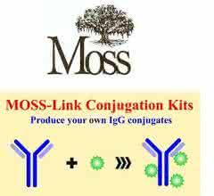 Eigene IgG-Konjugate produzieren: Moss-Link™ Konjugations- und Labeling Kits