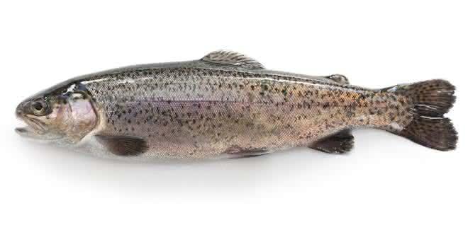 Um einen Fisch als Schwarzwaldforelle in den Verkehr zu bringen, muss dieser nach den in den entsprechenden EU-Verordnungen niedergelegten Regeln erzeugt werden.