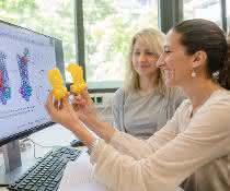 Enrica Bordignon (vorn) und Svetlana Kucher mit einem Modell des Transportproteins, das sie untersucht haben.