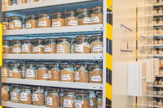 Akzessionen in der bundeszentralen Ex-situ-Genbank für landwirtschaftliche und gartenbauliche Kulturpflanzen in Gatersleben.