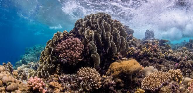 Ein flaches Korallenriff im zentralen Roten Meer