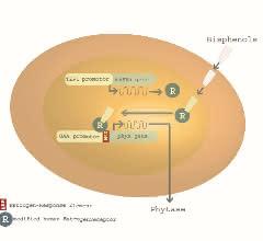 Bild 1: Schematische Darstellung des Arxula adeninivorans-Biosensors im A-YBS. ©new_diagnostics GmbH