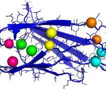 Fibronektin spielt bei der Wundheilung eine bedeutende Rolle. Die Grafik zeigt einen wichtigen Teil des Proteins mit Kontaktpaaren.