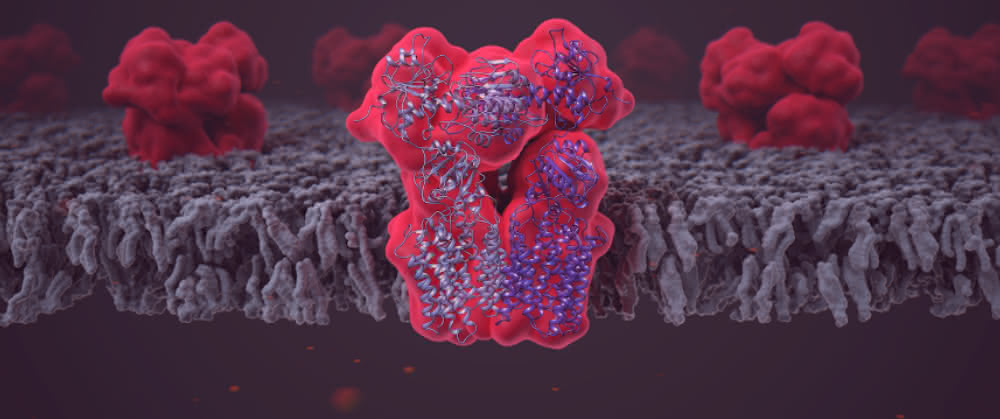 Das Enzym Transhydrogenase (NNT), eingebettet in die Lipiddoppelschicht der Mitochondrienmembran.