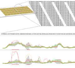 Bild 1: A) Schematische Darstellung der synthetisierten Peptide auf einem Microarray, welche mithilfe eines Tiling-Ansatzes berechnet wurden.