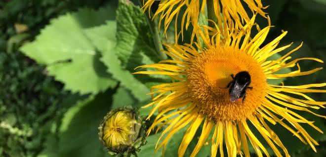 bundeskabinett: aktionsprogramm für insektenschutz