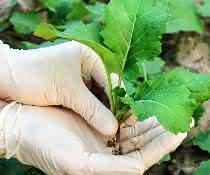 Pflanze mit Wurzel