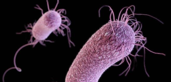 Computergeneriertes Bild des Bakteriums P.aeruginosa.