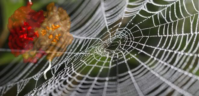 Das Bild zeigt ein Spinnennetz, überlagert mit der Strukturoberfläche der untersuchten, gebundenen Domänen eines Spinnenseidenproteins
