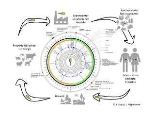 Übertragungswege bei Listerien-Infektionen sowie Darstellung des Genoms des hypervirulenten Listeria-Stamms.