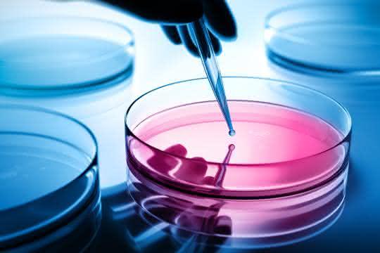 Aus einer Pipette wird eine Flüssigkeit in eine Petrischale gegeben.