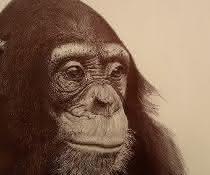 Zeichnung eines Schimpansen von Enrique Guisado Triay, einem kubanischen Künstler, der aktuell in Leipzig lebt und wirkt.