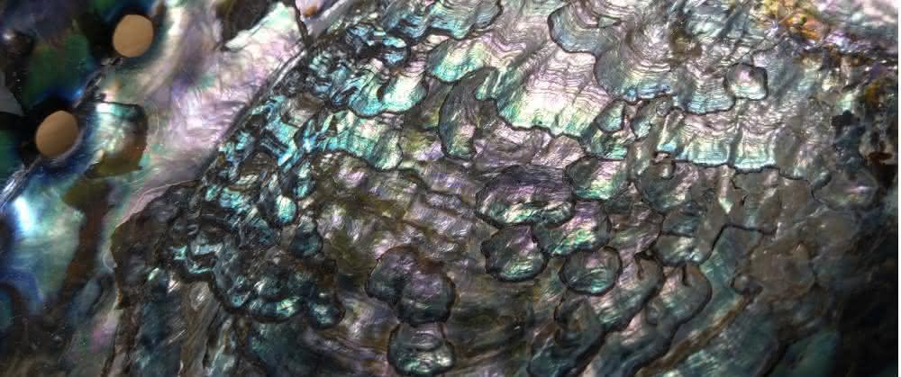 Perlmutt einer Abalone-Schnecke