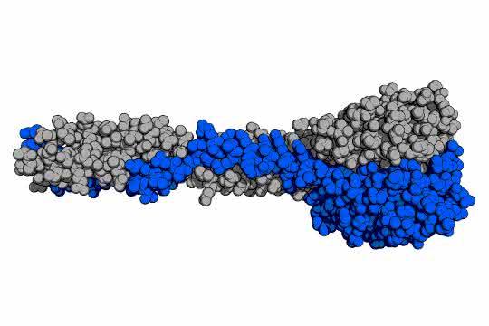 Graphische Darstellung des natürlichen Rezeptorbindeproteins der PSA-Phage.
