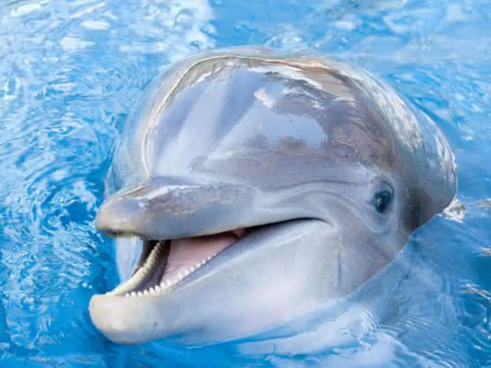 Oralsex bei Delfinen