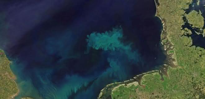 Allein in der etwa 70.000 Quadratkilometer umfassenden Deutschen Bucht entstehen bei der Algenblüte im FrühjahrAllein in der etwa 70.000 Quadratkilometer umfassenden Deutschen Bucht entstehen bei der Algenblüte im Frühjahr