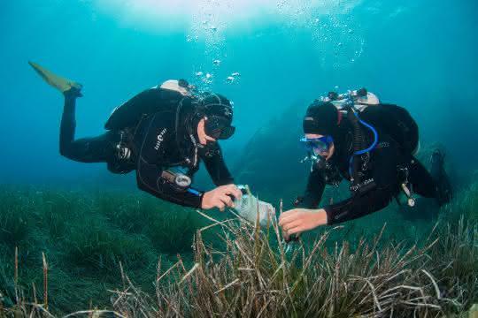 Aufnahme von zwei Tauchern am Meeresgrund