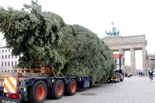 Weihnachtlicher Schwerlasttransport: Universal Transport bringt Weihnachtsbaum ans Brandenburger Tor