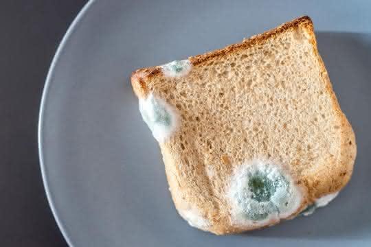 Schimmelpilz auf einem Toastbrot