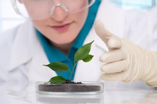 Laborbild mit Pflanze auf Petrischale