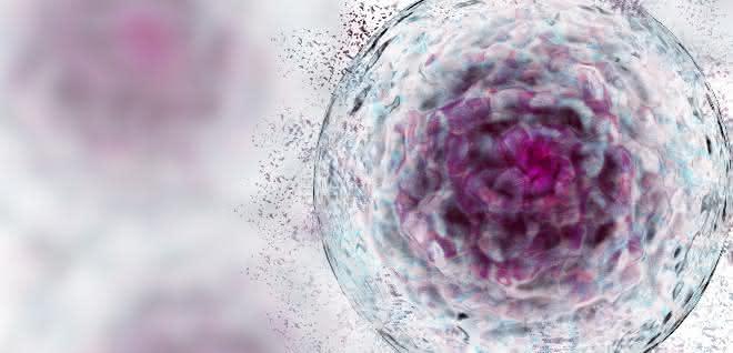 Bild einer Zelle