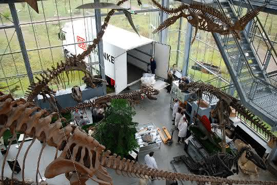 DB Schenker befördert Dinosaurierskelett