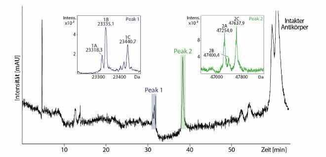 Analyse von Antikörperfragmenten