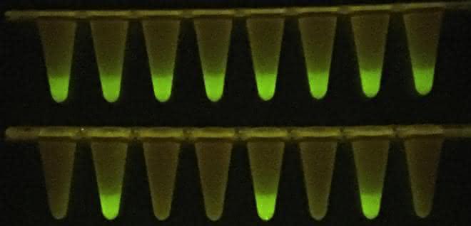 Gefäße mit fluoreszierenden Proben