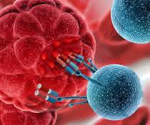 Antikörper, Tumorzellen, Immunzellen (Kunstbild)