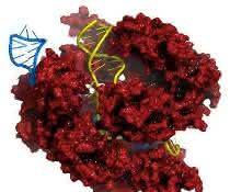 CRISPR-Cas9-Komplex mit DNA (Bild: Merck)