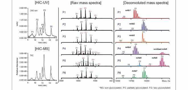 Chromatogramm und Massenspektren einer MAb-Mischung