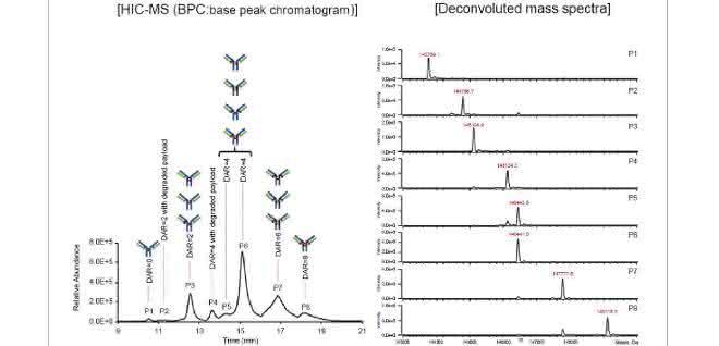 DAR-Bestimmung (Zuordnung zu Peaks) und Massenspektren der SigmaMAb-ADC-Mimik
